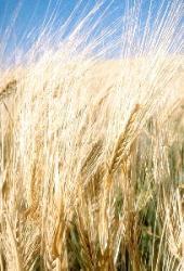 Journée mondiale du pain