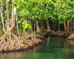 journée internationale pour la  conservation  de l'écosystème  des  mangroves