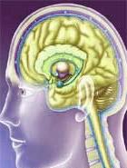 Journée mondiale des accidents vasculaires cérébraux