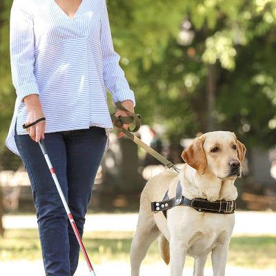 La Journée internationale des chiens-guides