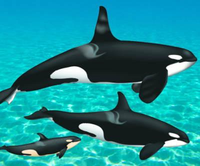 Journée Mondiale de l'Orque