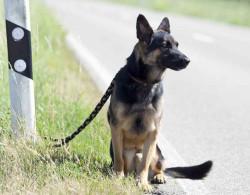 Journée Mondiale contre l'abandon des animaux domestiques