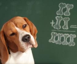 La Journée Mondiale de l'intelligence animale