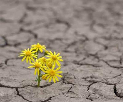 Journée Mondiale du Climat