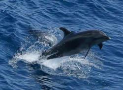 Journée mondiale des dauphins