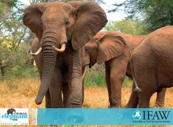 Journée mondiale des éléphants