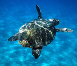 Journée mondiale de la tortue